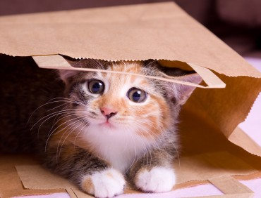 shopping kitten