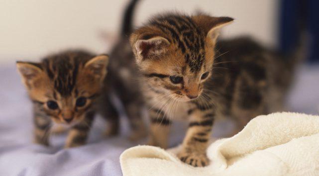 Les visionnages de vidéos de chatons mignons en hausse de 7000% depuis 15  jours