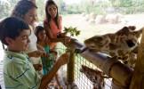 Pour informer sur la cruauté de la Nature, un zoo va empailler plusieurs de ses visiteurs