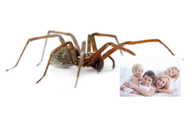 paniqu e une araign e ne dort plus depuis qu 39 elle a aper u des humains dans sa chambre le. Black Bedroom Furniture Sets. Home Design Ideas