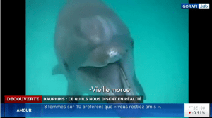 video_dauphins