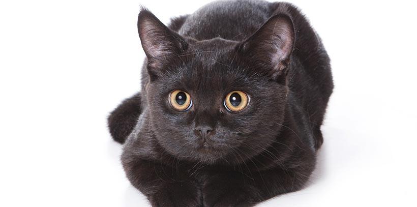 en vitant de passer sous une chelle il bute sur un chat. Black Bedroom Furniture Sets. Home Design Ideas