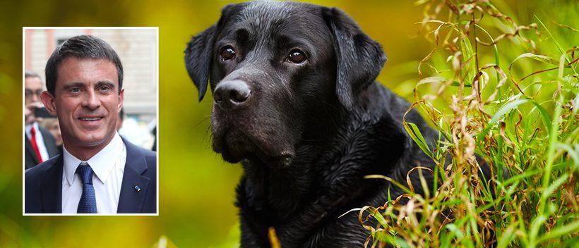 Le chien d 39 emmanuel macron d couvre manuel valls cach for Au jardin d emmanuel