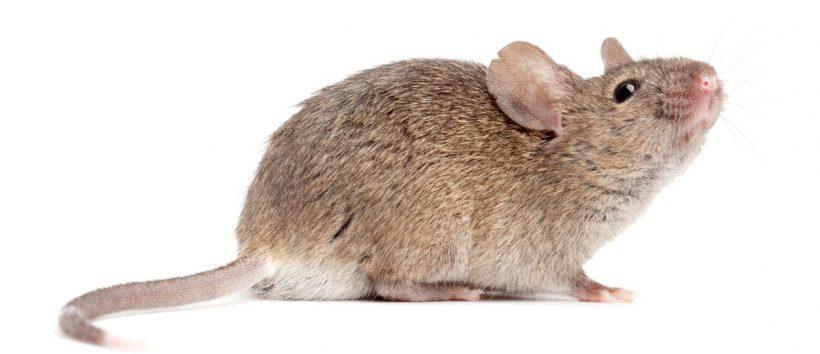 La petite souris agresse un enfant qui ne perd pas ses - Petite souris qui danse ...