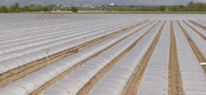 field in the Loire valley