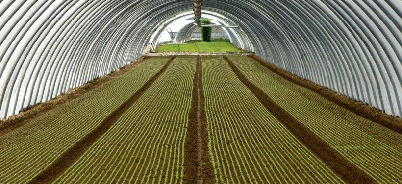 EL'élégance bicolore de cette serre de salade ressemblent comme deux gouttes d'eau à un tableau du Moma de New York. Quand agriculture intensive et art contemporain ne font qu'un. Étourdissant.